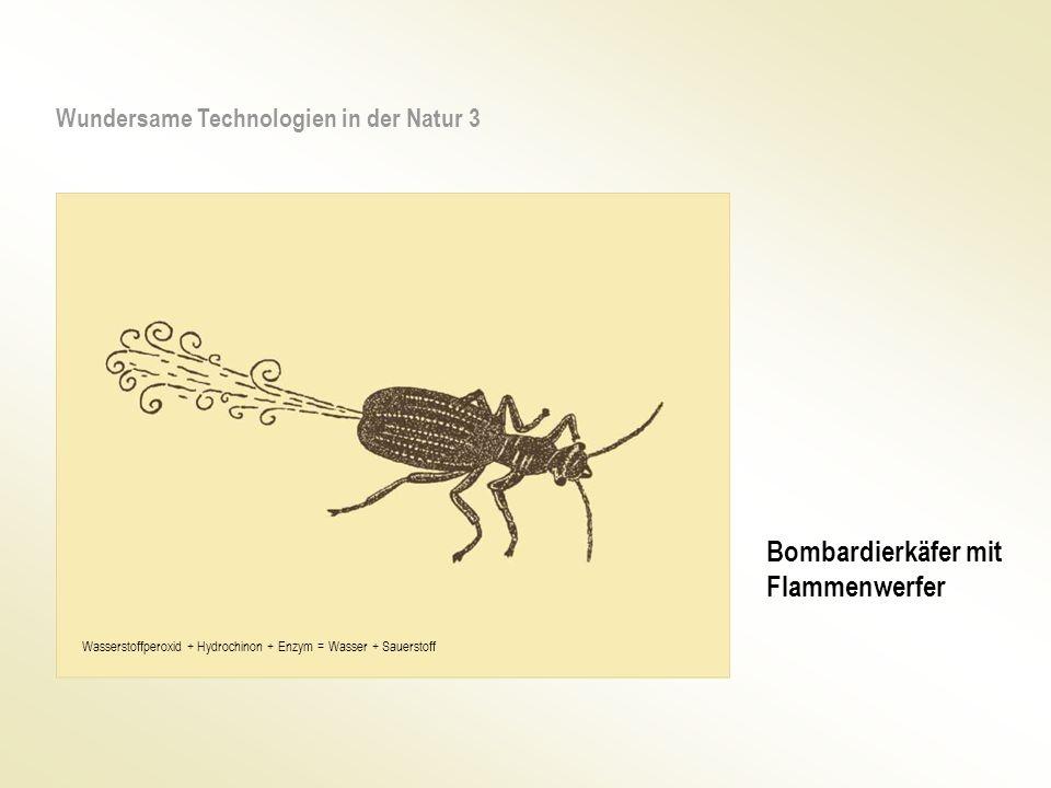 Schlagbewegung oder Rotation Mikro Air Vehikel (MAV) Vorbild Libelle