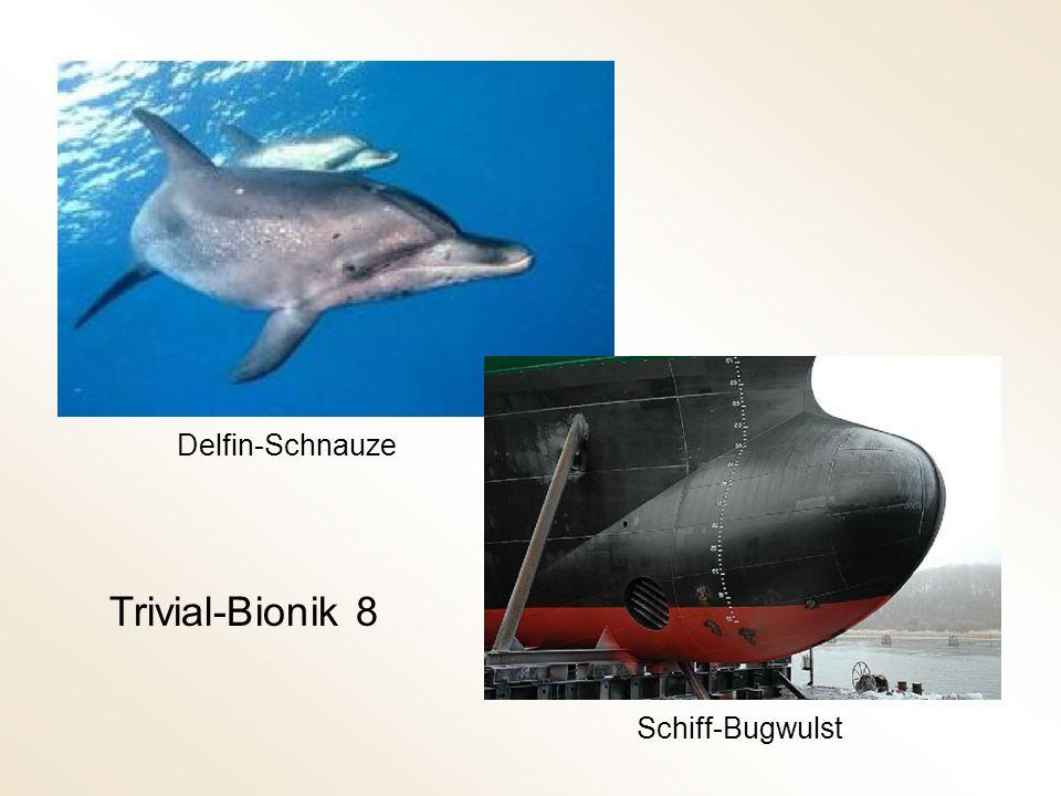 Trivial-Bionik 8 Schiff-Bugwulst Delfin-Schnauze