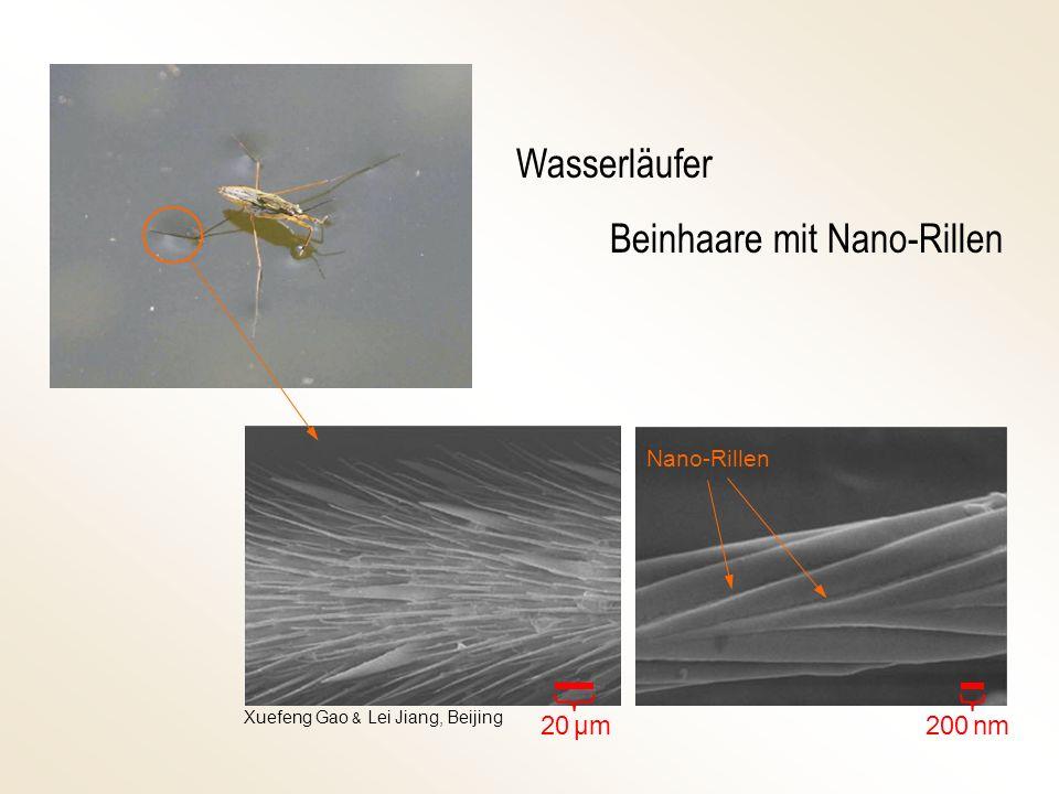 Wasserläufer Beinhaare mit Nano-Rillen Nano-Rillen 200 nm 20 μm Xuefeng Gao & Lei Jiang, Beijing