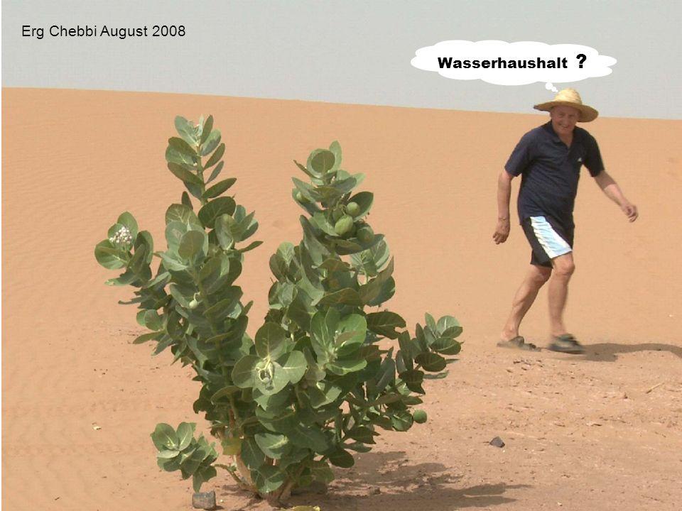 Wasserhaushalt ? Erg Chebbi August 2008