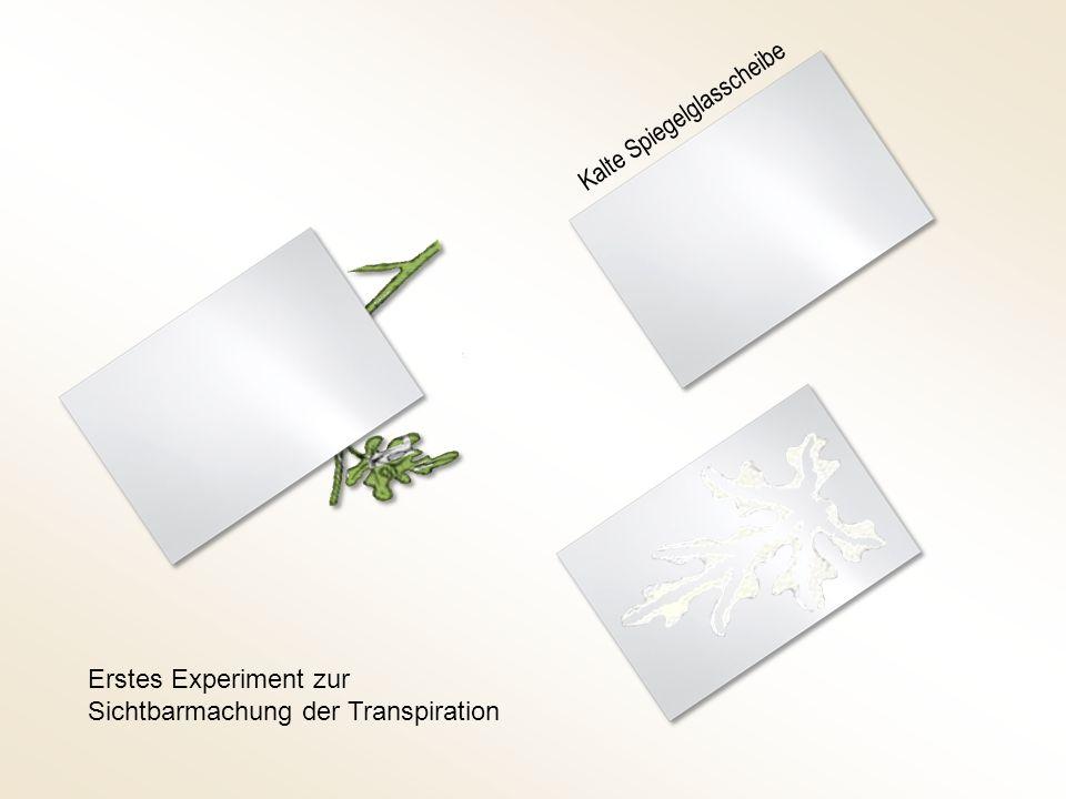 Kalte Spiegelglasscheibe Erstes Experiment zur Sichtbarmachung der Transpiration
