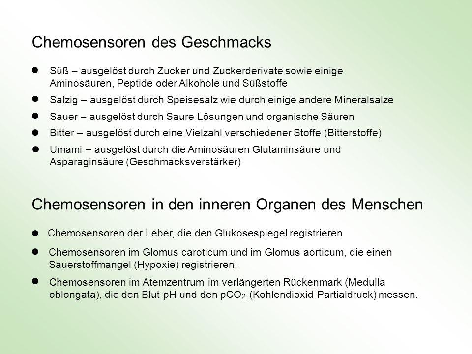 Chemosensoren in den inneren Organen des Menschen Chemosensoren der Leber, die den Glukosespiegel registrieren Chemosensoren im Glomus caroticum und i