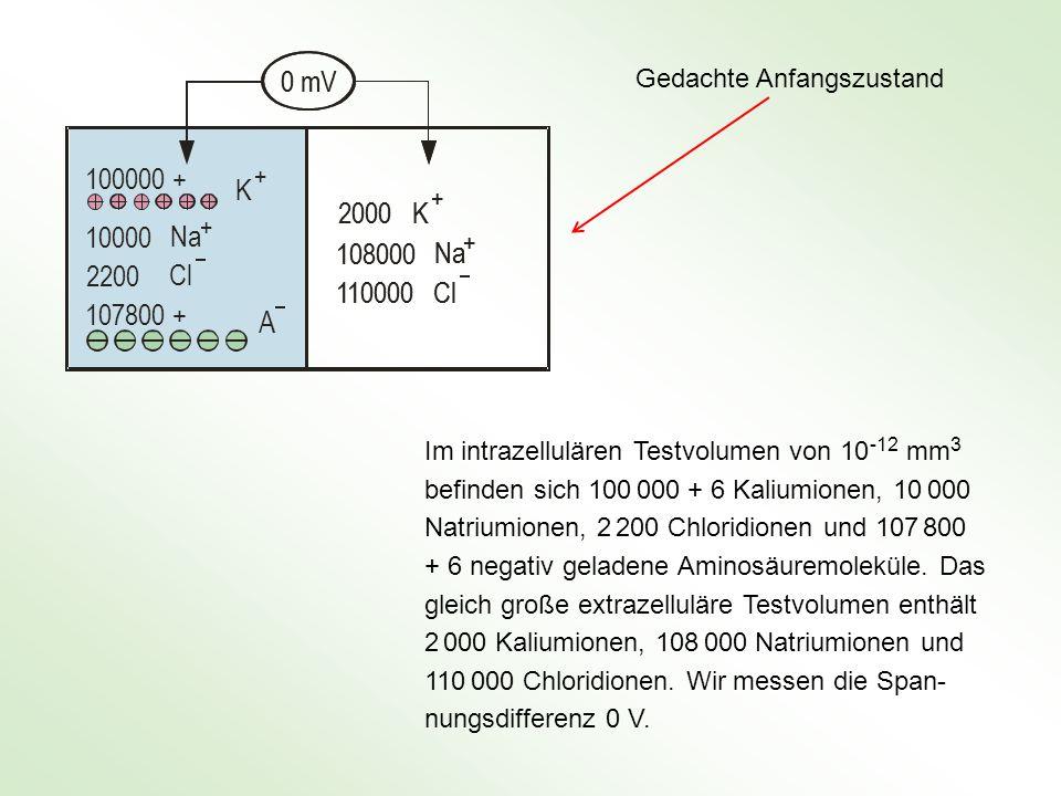 Im intrazellulären Testvolumen von 10 -12 mm 3 befinden sich 100 000 + 6 Kaliumionen, 10 000 Natriumionen, 2 200 Chloridionen und 107 800 + 6 negativ