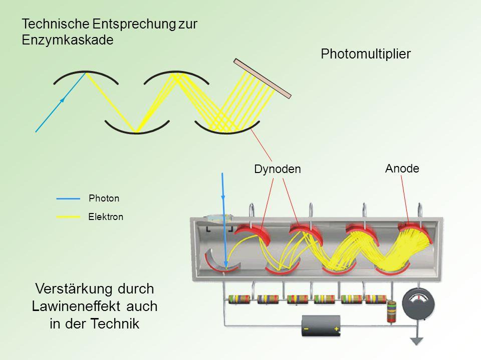 Photomultiplier Verstärkung durch Lawineneffekt auch in der Technik Dynoden Anode Photon Elektron Technische Entsprechung zur Enzymkaskade