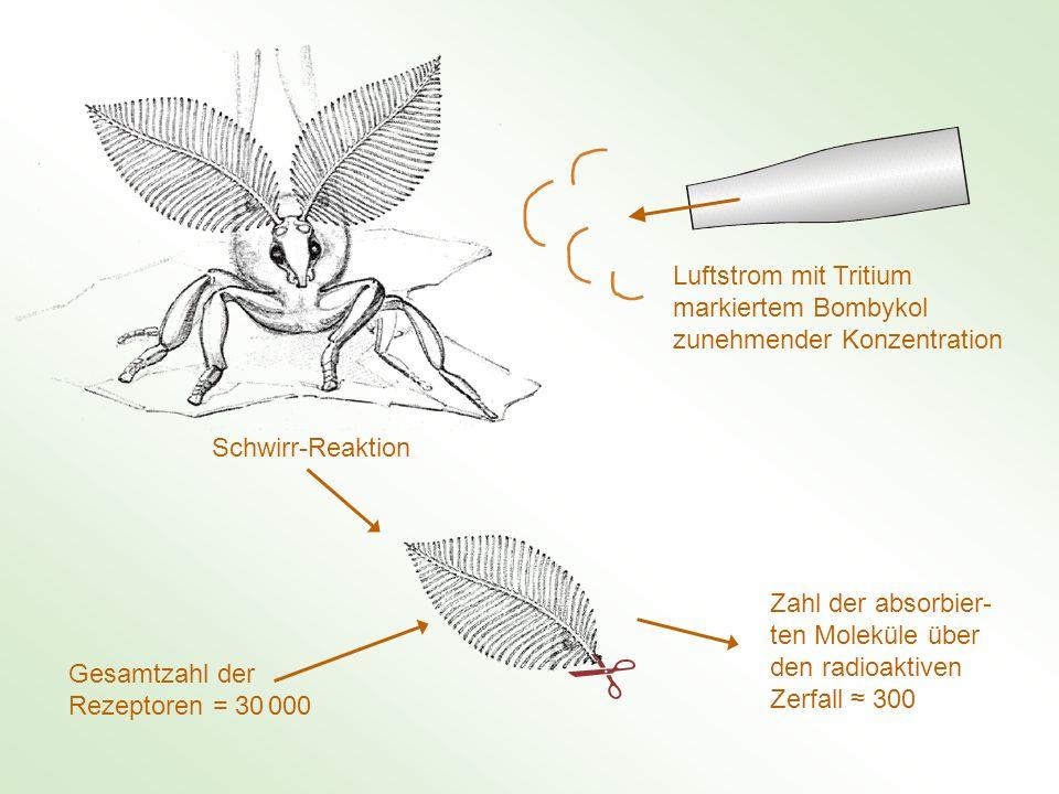Luftstrom mit Tritium markiertem Bombykol zunehmender Konzentration Schwirr-Reaktion Zahl der absorbier- ten Moleküle über den radioaktiven Zerfall 30