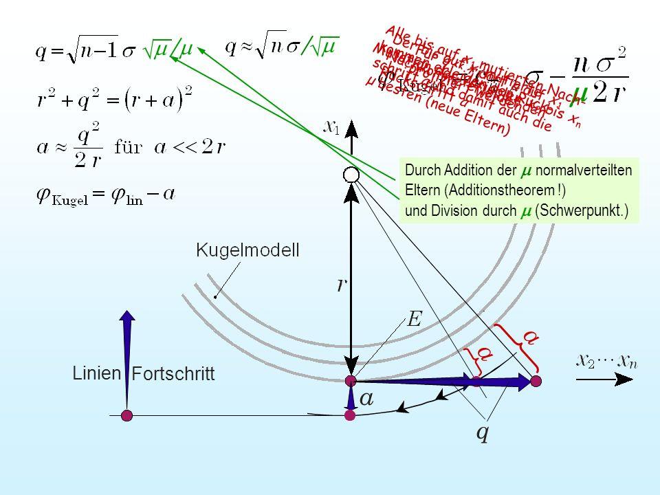 a Für q << r darf a auf x 1 projiziert werden Mutation der Variablen x 2 bis x n Der bis auf x 1 mutierte Nachkomme erleidet den Rückschritt a und Div