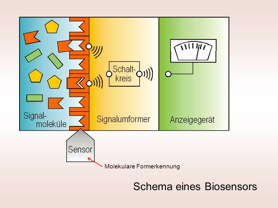 Schema eines Biosensors Molekulare Formerkennung