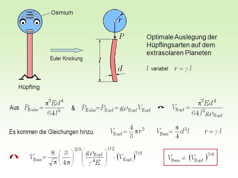 Aus & Optimale Auslegung der Hüpflingsarten auf dem extrasolaren Planeten Es kommen die Gleichungen hinzu: Euler Knickung l variabel Osmium Hüpfling