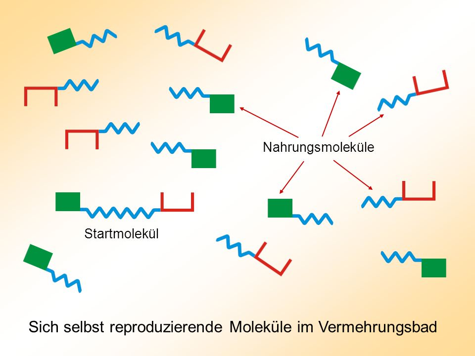 Sich selbst reproduzierende Moleküle im Vermehrungsbad Nahrungsmoleküle Startmolekül