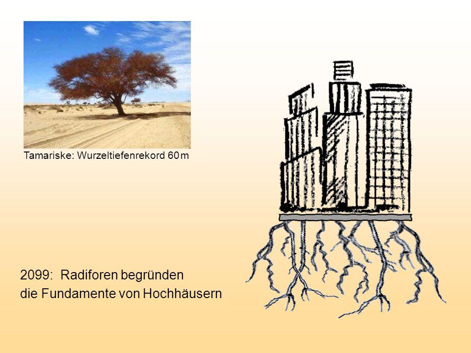2099: Radiforen begründen die Fundamente von Hochhäusern Tamariske: Wurzeltiefenrekord 60 m