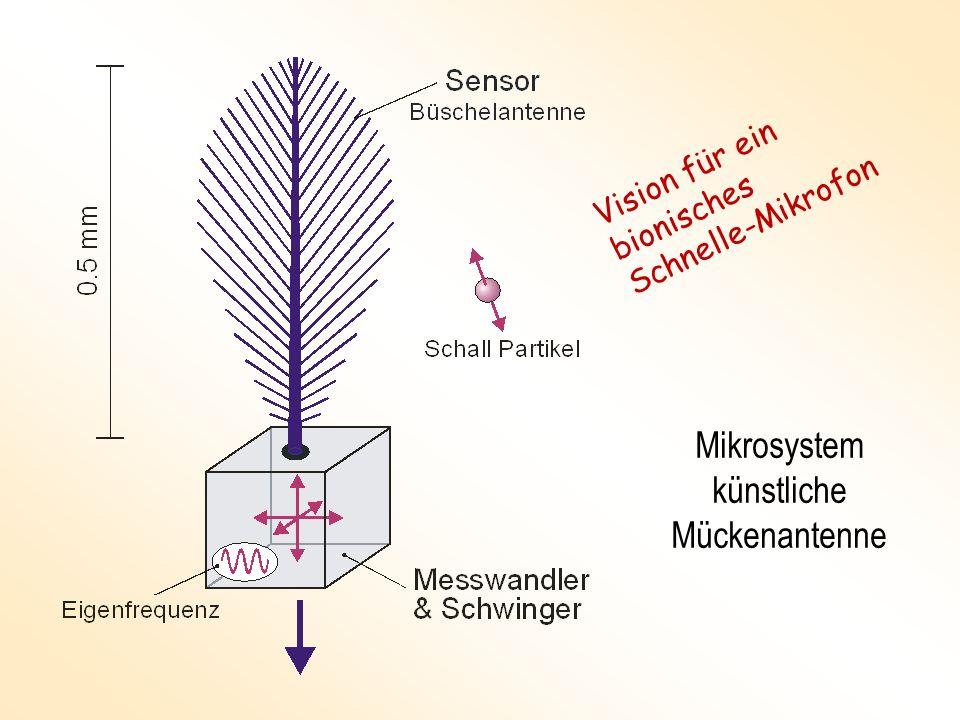 Mikrosystem künstliche Mückenantenne Vision für ein bionisches Schnelle-Mikrofon