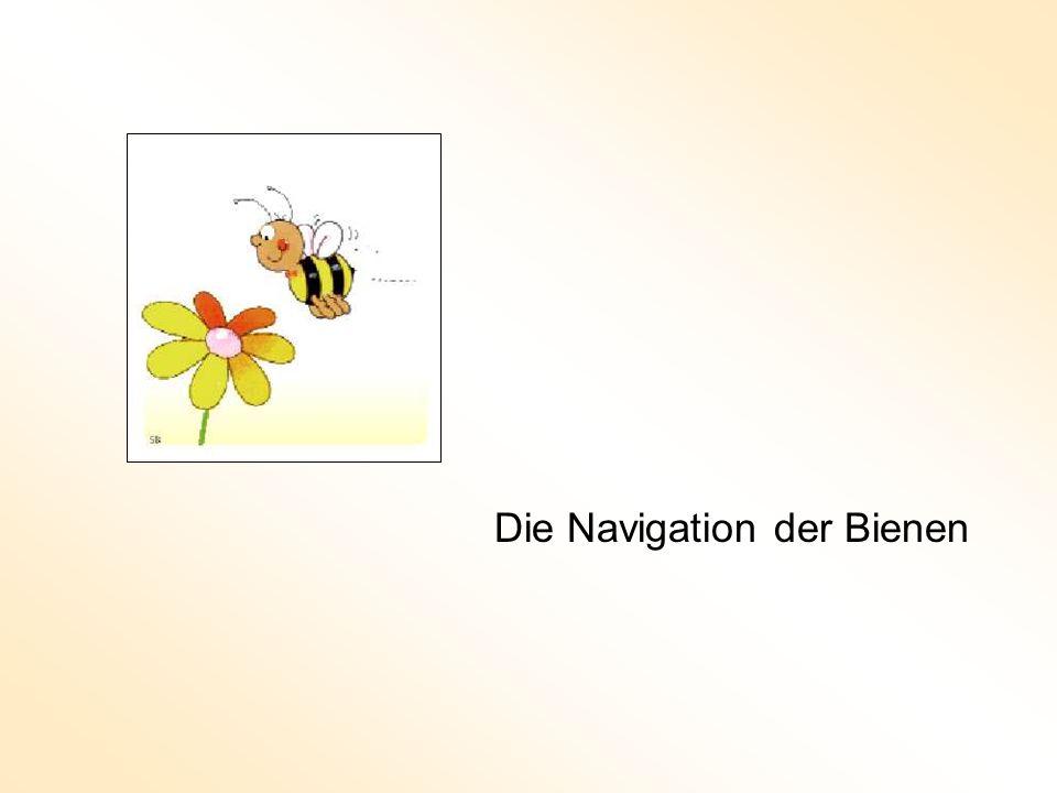Die Navigation der Bienen
