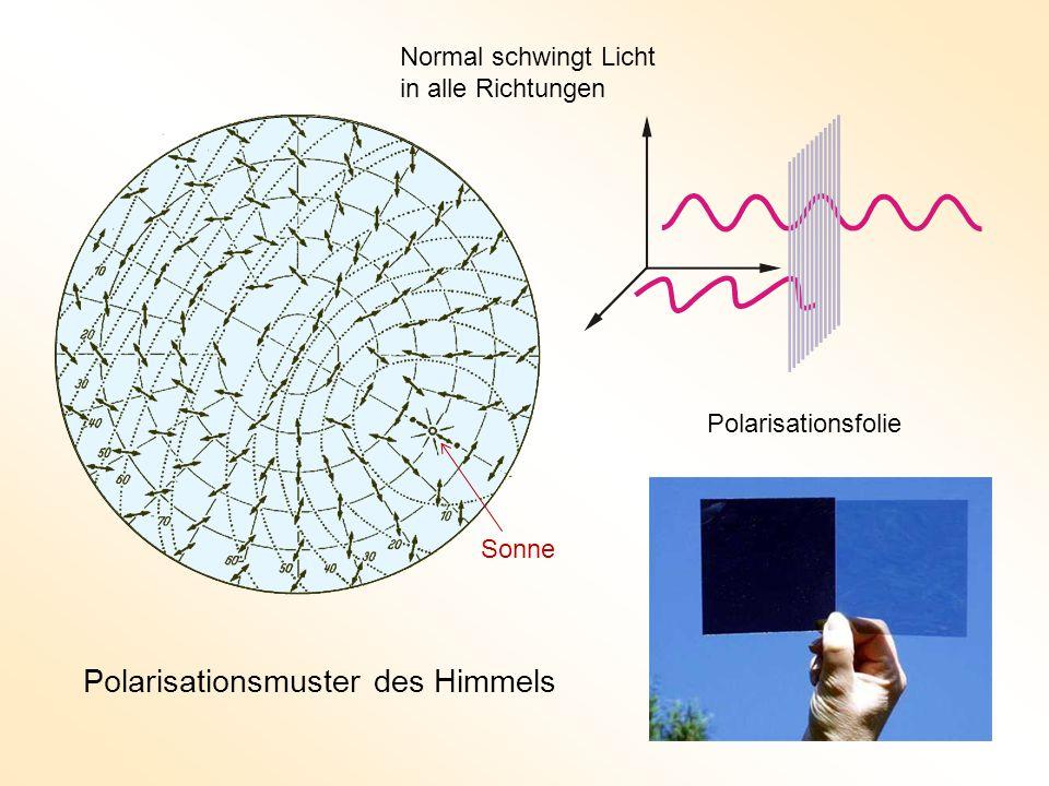 Polarisationsmuster des Himmels Polarisationsfolie Normal schwingt Licht in alle Richtungen Sonne