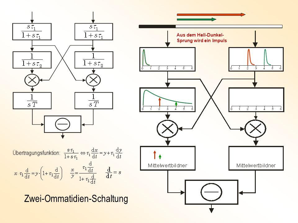 Zwei-Ommatidien-Schaltung Übertragungsfunktion: Aus dem Hell-Dunkel- Sprung wird ein Impuls