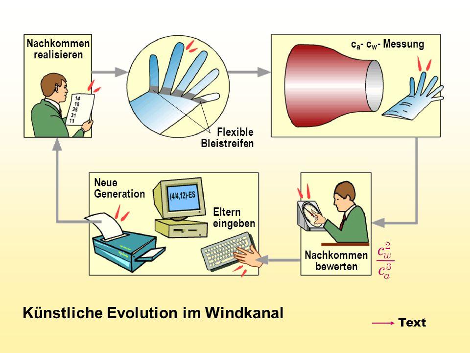 Künstliche Evolution im Windkanal Neue Generation c a - c w - Messung Flexible Bleistreifen Nachkommen realisieren Eltern eingeben Nachkommen bewerten