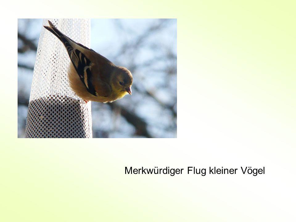 Merkwürdiger Flug kleiner Vögel