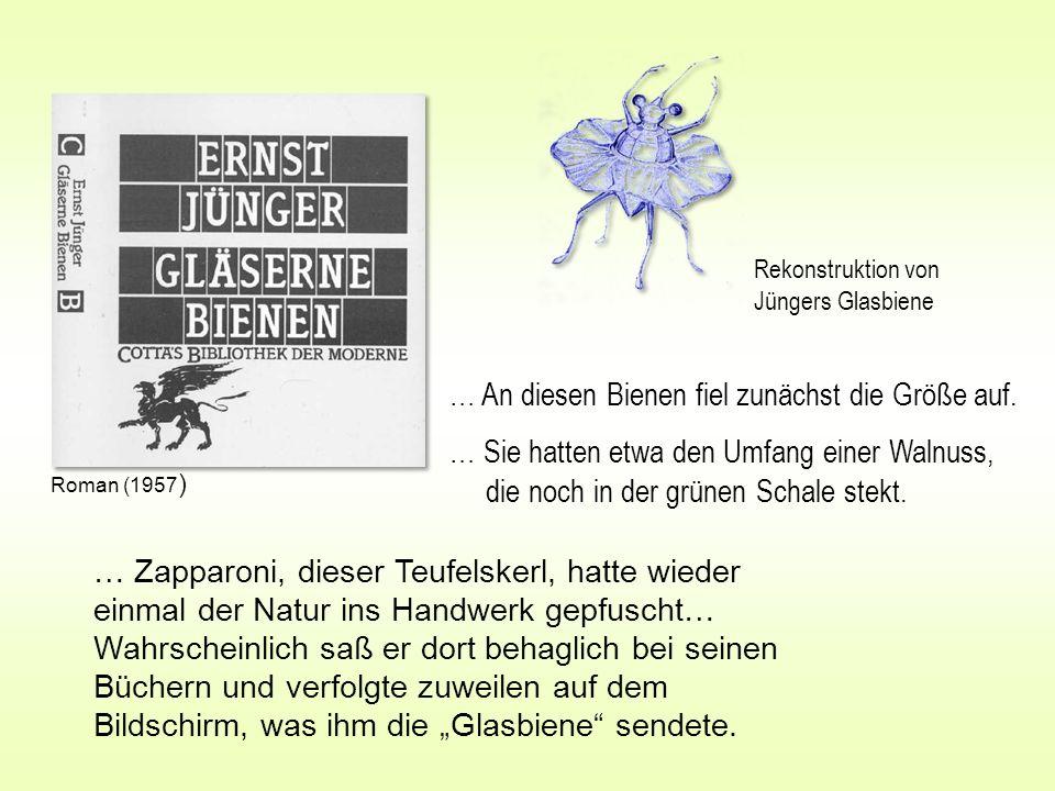 … An diesen Bienen fiel zunächst die Größe auf. … Sie hatten etwa den Umfang einer Walnuss, die noch in der grünen Schale stekt. … Zapparoni, dieser T