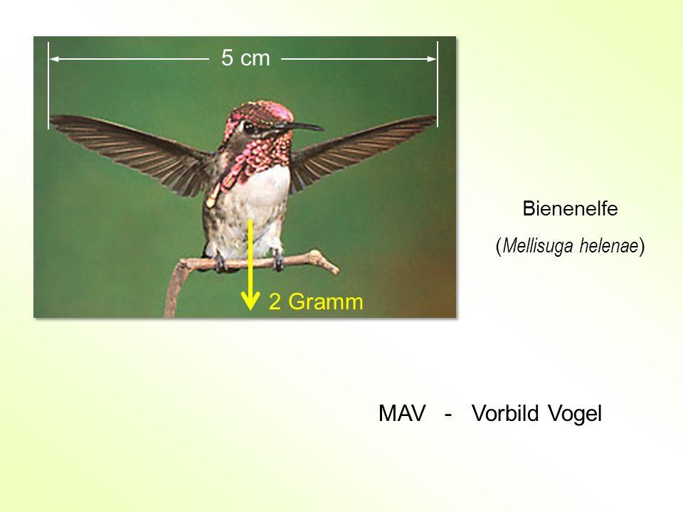 Bienenelfe ( Mellisuga helenae ) 5 cm 2 Gramm MAV - Vorbild Vogel