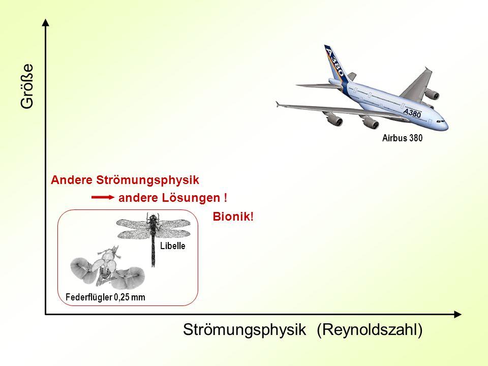 Größe Strömungsphysik (Reynoldszahl) Andere Strömungsphysik andere Lösungen ! Federflügler 0,25 mm Libelle Airbus 380 Bionik!