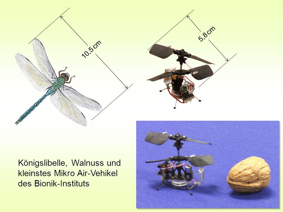 10,5 cm 5,8 cm Königslibelle, Walnuss und kleinstes Mikro Air-Vehikel des Bionik-Instituts