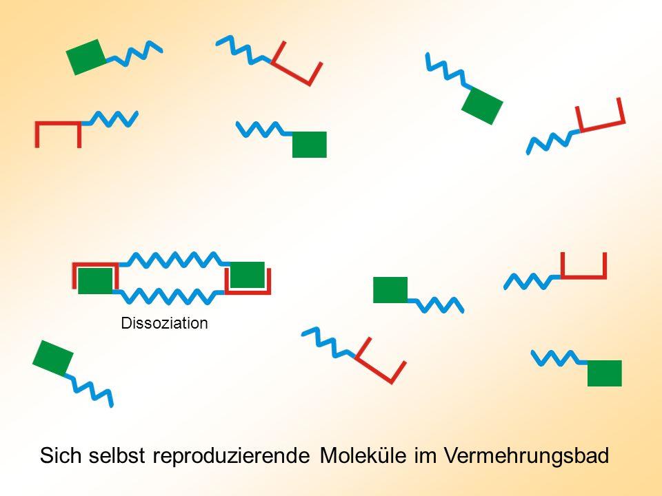 Dissoziation Sich selbst reproduzierende Moleküle im Vermehrungsbad