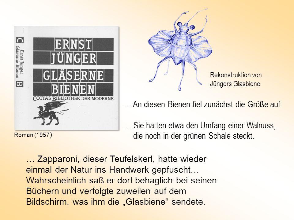 … An diesen Bienen fiel zunächst die Größe auf. … Sie hatten etwa den Umfang einer Walnuss, die noch in der grünen Schale steckt. … Zapparoni, dieser