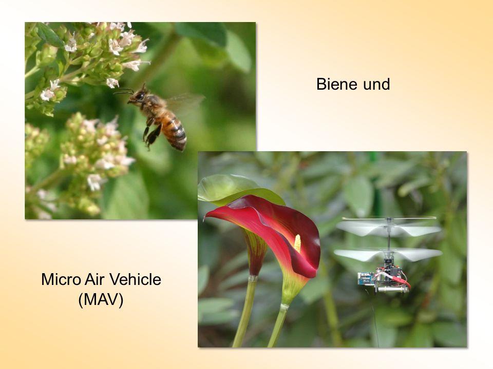 Biene und Micro Air Vehicle (MAV)