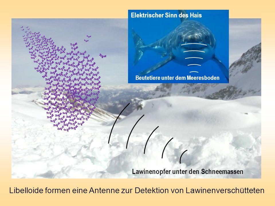 Lawinenopfer unter den Schneemassen Elektrischer Sinn des Hais Beutetiere unter dem Meeresboden Libelloide formen eine Antenne zur Detektion von Lawinenverschütteten