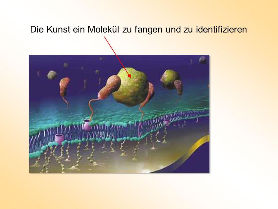 Die Kunst ein Molekül zu fangen und zu identifizieren