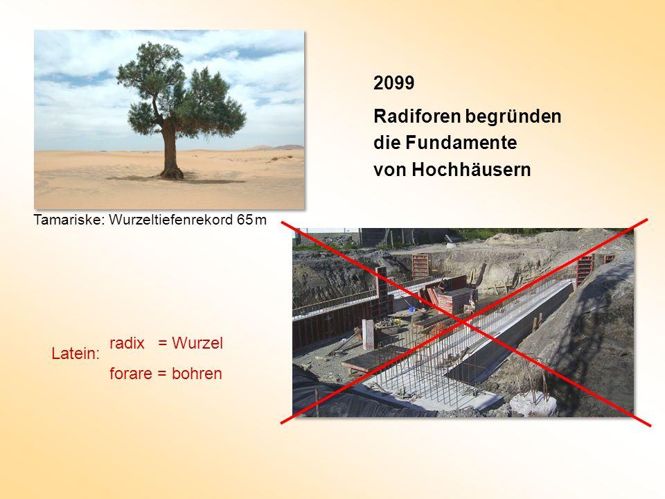 2099 Radiforen begründen die Fundamente von Hochhäusern Tamariske: Wurzeltiefenrekord 65 m radix = Wurzel forare = bohren Latein: