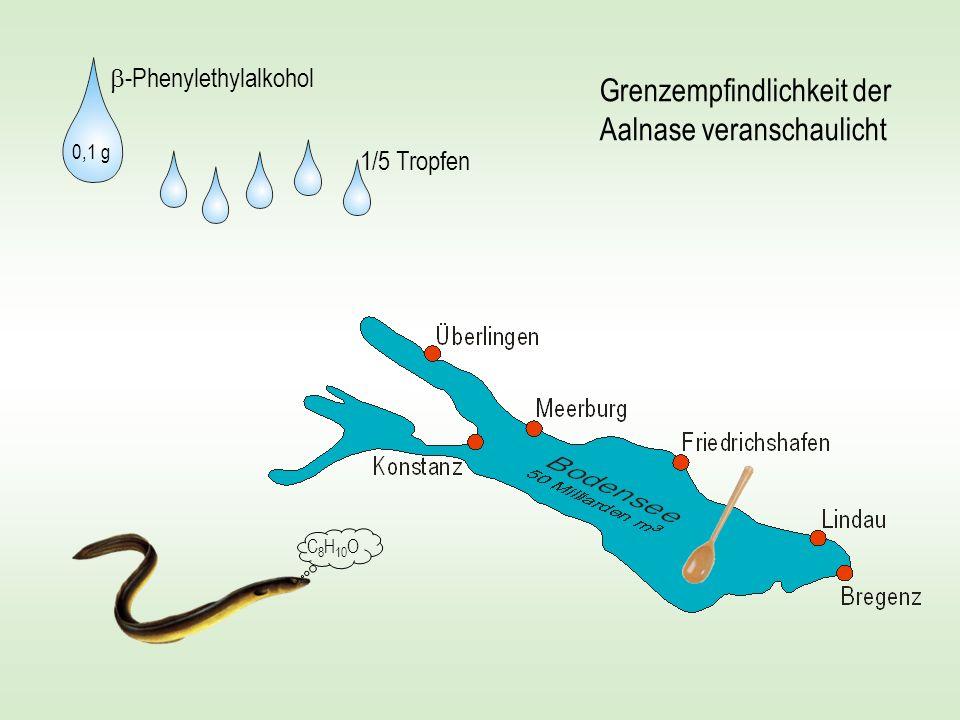 Grenzempfindlichkeit der Aalnase veranschaulicht -Phenylethylalkohol 1/5 Tropfen C 8 H 10 O 0,1 g
