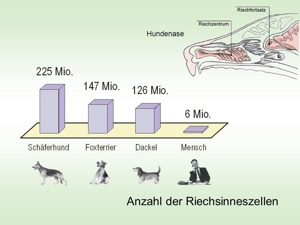 Anzahl der Riechsinneszellen Hundenase