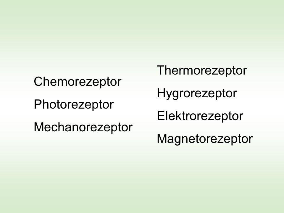 Thermorezeptor Hygrorezeptor Elektrorezeptor Magnetorezeptor Thermorezeptor Hygrorezeptor Elektrorezeptor Magnetorezeptor Chemorezeptor Photorezeptor