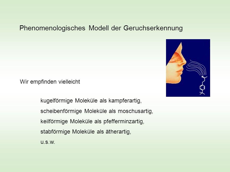 Phenomenologisches Modell der Geruchserkennung Wir empfinden vielleicht kugelförmige Moleküle als kampferartig, scheibenförmige Moleküle als moschusar