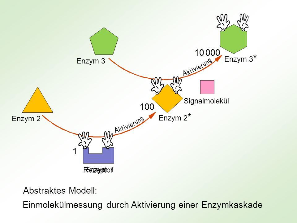 Rezeptor Signalmolekül 100 10 000 1 Enzym 1 Enzym 2 * Enzym 2 Enzym 3 Enzym 3 * k u t i e v r A i n g k u t i e v r A i n g Einmolekülmessung durch Ak