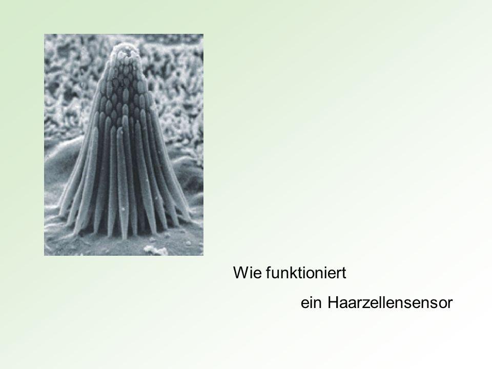 Wie funktioniert ein Haarzellensensor