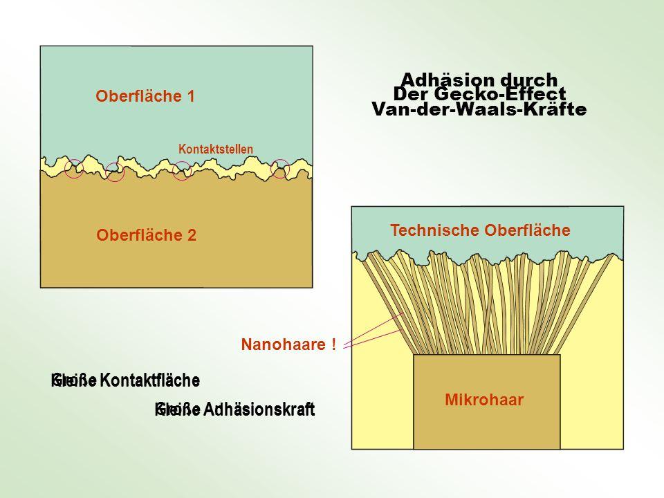 Oberfläche 1 Oberfläche 2 Mikrohaar Nanohaare ! Technische Oberfläche Der Gecko-Effect Adhäsion durch Van-der-Waals-Kräfte Kleine Kontaktfläche Kleine