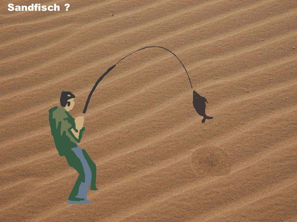 Sandfisch ?