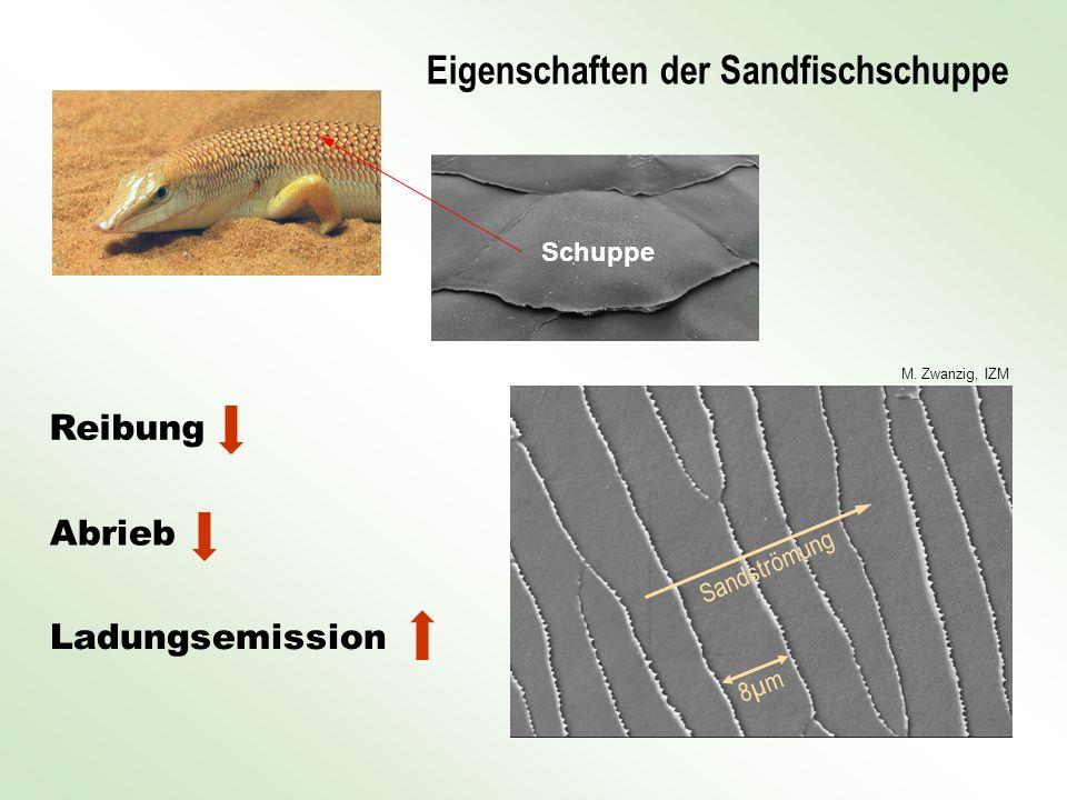 Reibung Abrieb Ladungsemission Eigenschaften der Sandfischschuppe M. Zwanzig, IZM 8µm8µm Sandströmung Schuppe