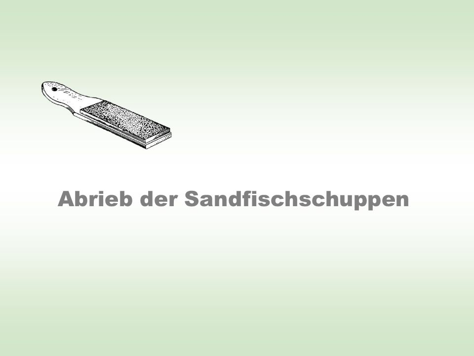 Abrieb der Sandfischschuppen