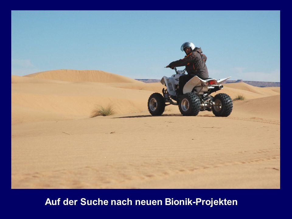 Auf der Suche nach neuen Bionik-Projekten