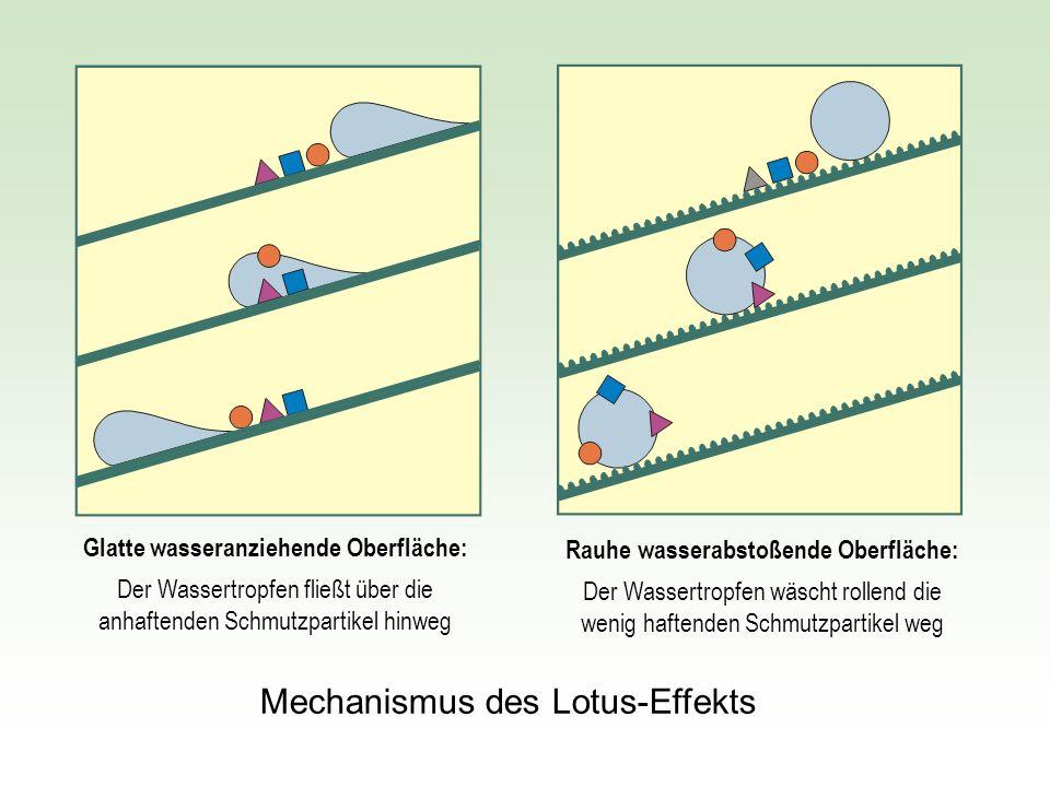 Glatte wasseranziehende Oberfläche: Der Wassertropfen fließt über die anhaftenden Schmutzpartikel hinweg Rauhe wasserabstoßende Oberfläche: Der Wasser