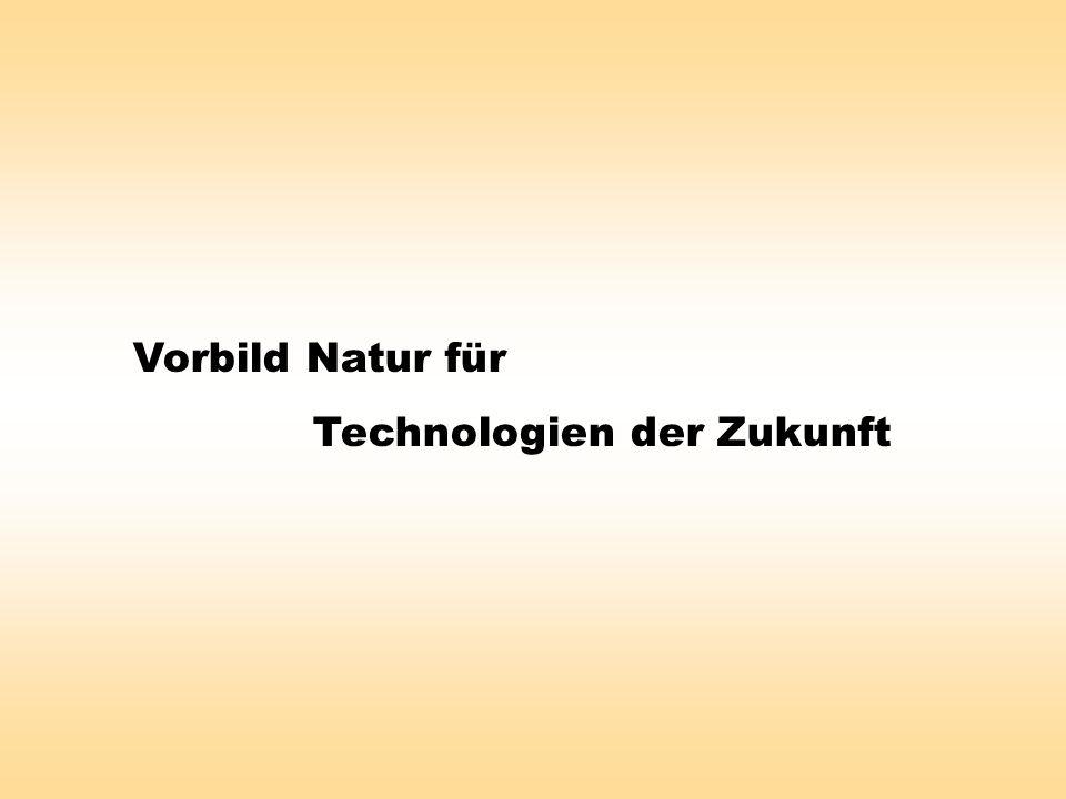 Vorbild Natur für Technologien der Zukunft