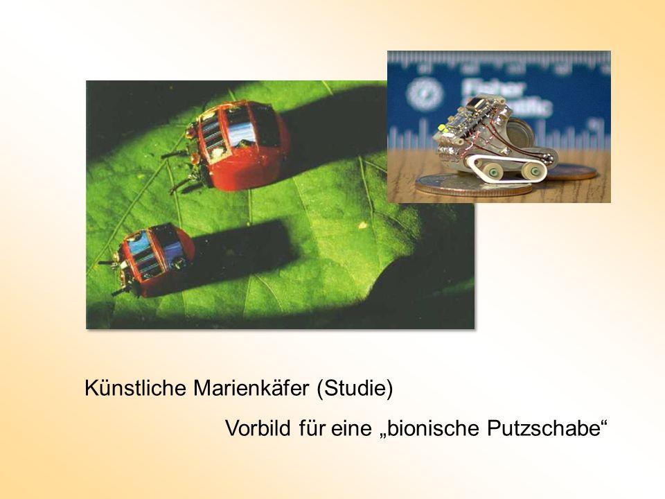 Künstliche Marienkäfer (Studie) Vorbild für eine bionische Putzschabe