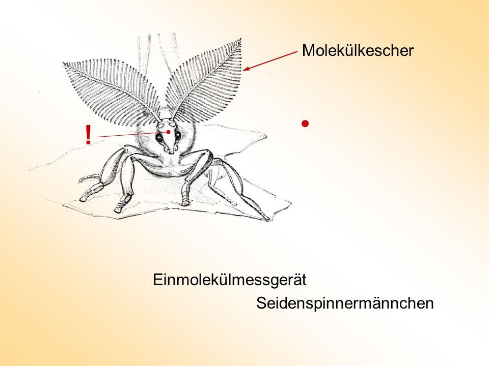 Einmolekülmessgerät Seidenspinnermännchen Molekülkescher !