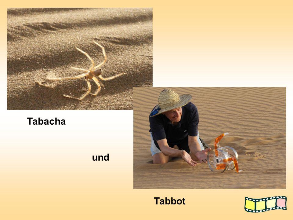 Tabacha und Tabbot