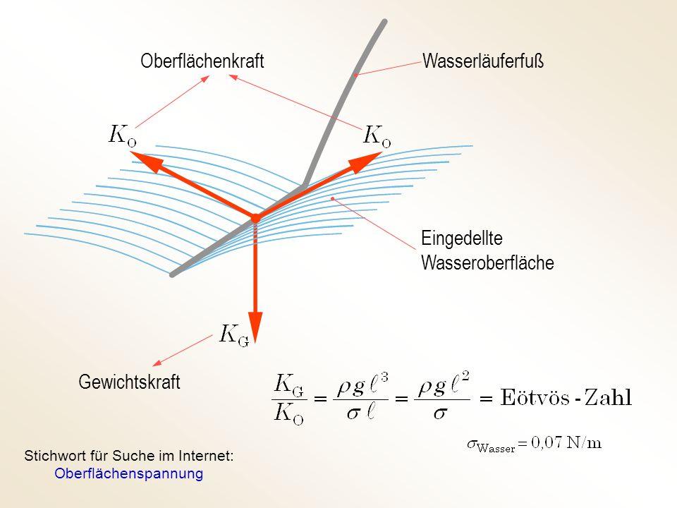 Oberflächenkraft Gewichtskraft Wasserläuferfuß Eingedellte Wasseroberfläche Stichwort für Suche im Internet: Oberflächenspannung