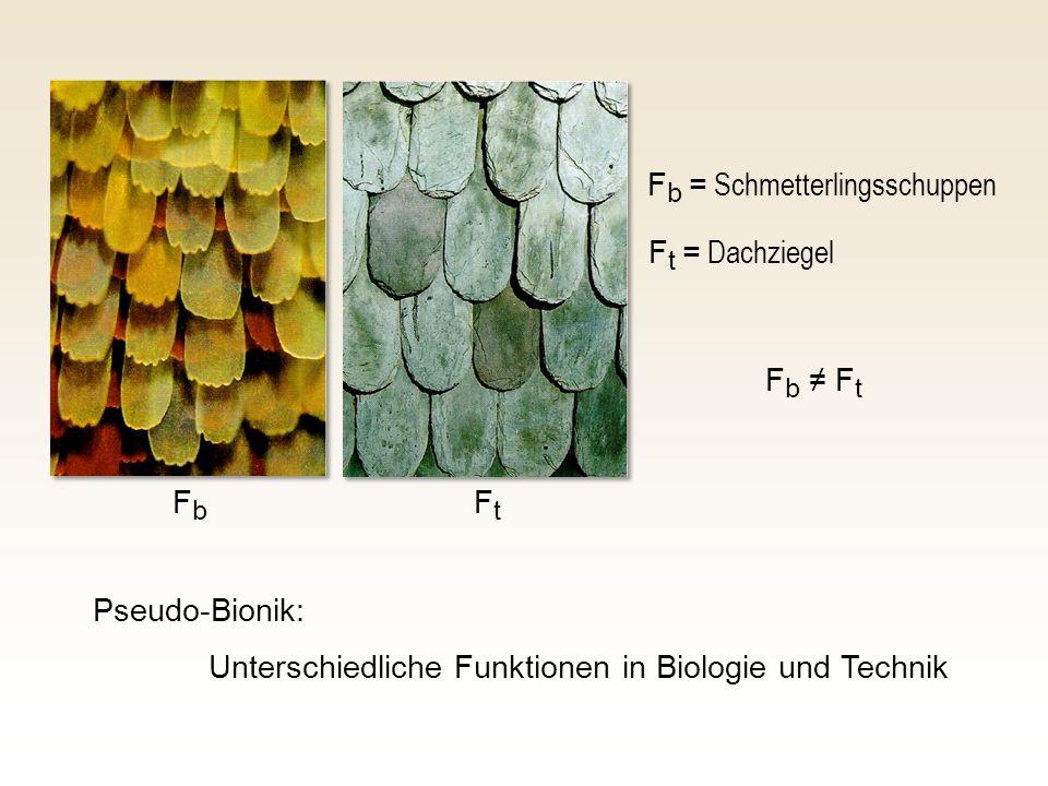 F b = Schmetterlingsschuppen F t = Dachziegel Pseudo-Bionik: Unterschiedliche Funktionen in Biologie und Technik FbFb FtFt F b F t