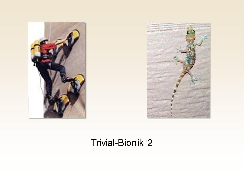 Trivial-Bionik 2