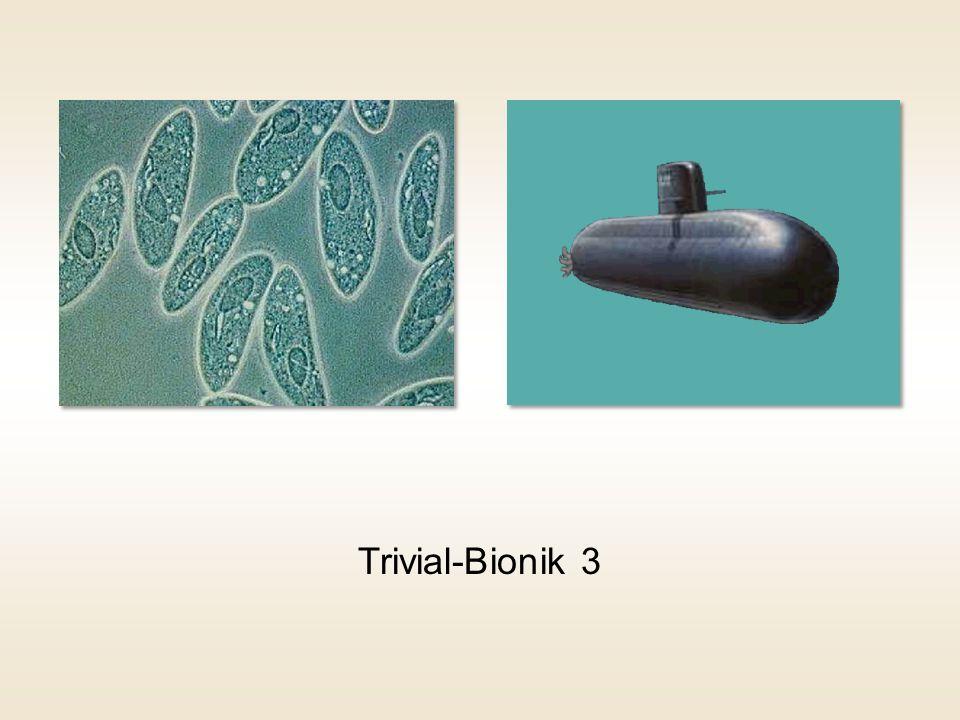 Trivial-Bionik 3